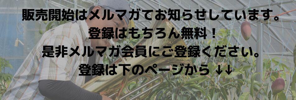 マンゴーの緒方ファーム/プランニングOGATA